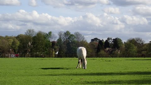 Horses grazing in field, Chorleywood, Hertfordshire