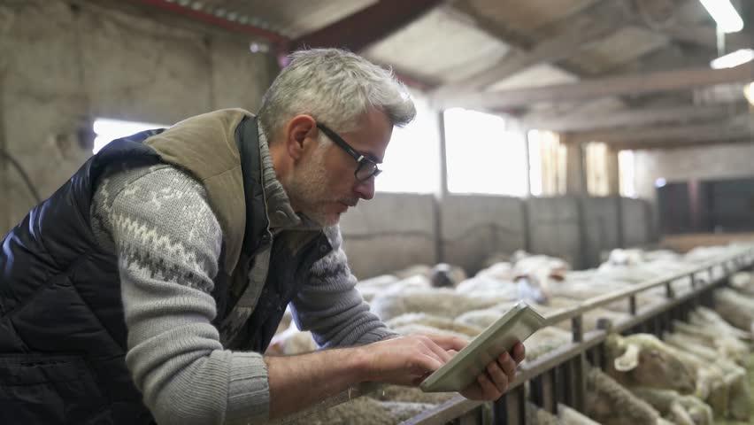Sheep stockbreeder in barn using digital tablet | Shutterstock HD Video #1010332712
