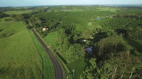Slow aerial rise above beautiful Australian countryside revealing macadamia farm and agricultural land. New South Wales, Australia