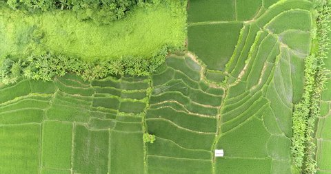 Aerial view of rice terrace. Flying over rice field, Asia, Bali