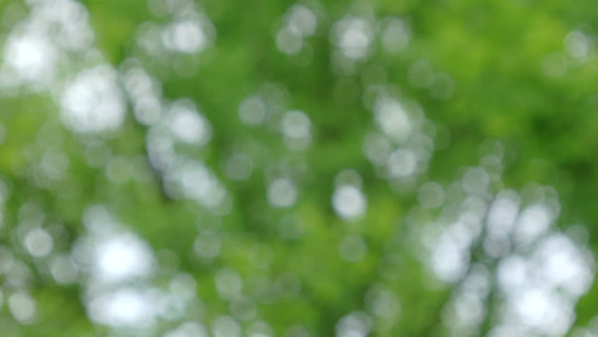 Abstract nature background #1010600762