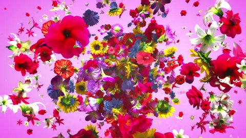 Exploding colorful flowers in 4K