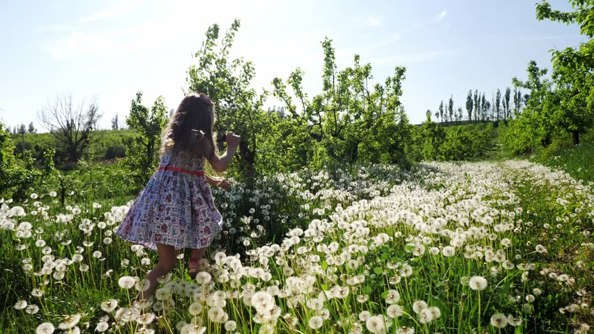 A girl runs through the garden with dandelions on a sunny day. Slow motion. | Shutterstock HD Video #1010833352