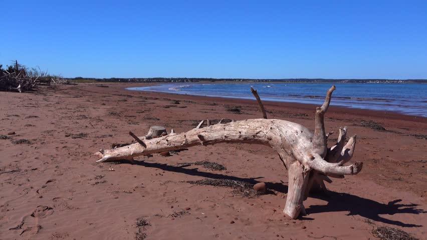 Prince Edward Island PEI 4K Robinson's Island driftwood