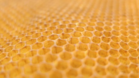 beehive, honeycomb close up