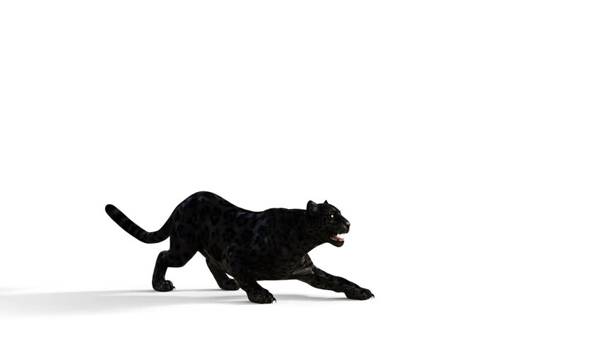 3d Illustration Black Panther Isolate on White Background with Alpha Matte, Black Tiger Attack Seamless Loop Animation.