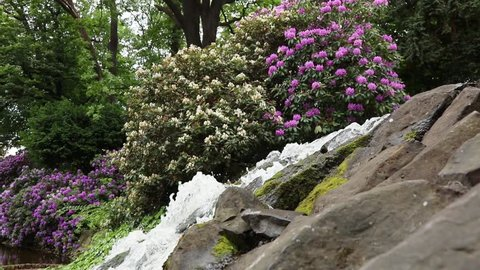 Small waterfall with blossom flowers in botanic garden, in summertime. Wroclaw, Poland