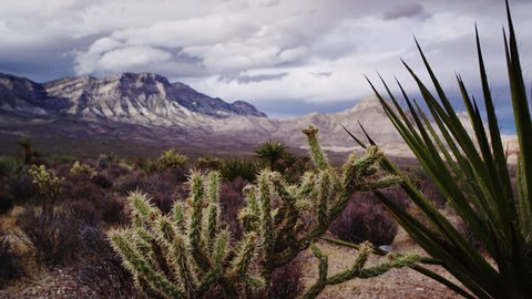 Dramatic Desert Landscape with Cholla Cacti and Yucca Featured Prominently with Red Rock Canyon Revealed in Soft Focus Background