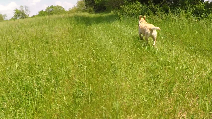 POV view of driving through a large hay pasture with a dog running along   Shutterstock HD Video #1011348572