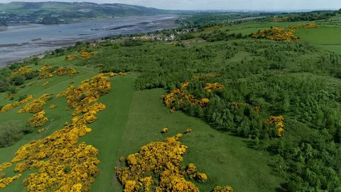 Aerial footage flying over woodland and yellow gorse covered hillside to the village of Langbank on the south shore of the Firth of Clyde.
