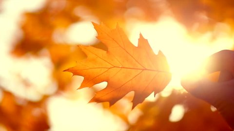Autumn scene. Person holding autumn leaf with sun beam over blurred background. Fall backdrop with colorful bright leaves and sun flares. 4K UHD video