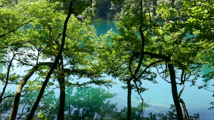 Crystal clear blue lake in Plitvice Lakes National Park surrounded by tree forest