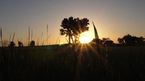 Sunrise Landscape with Grass Pedestal Up