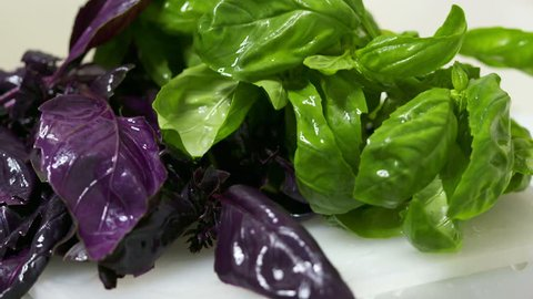 Wet green and opal purple basil leaves after washing. Rinsing herbs before cooking salad of light greens.