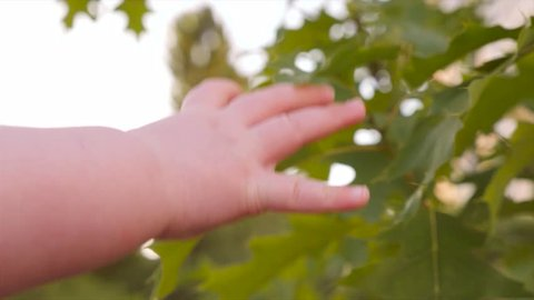 Baby's fingers touch green leaves of oak tree on sunny summer day. Baby's hand trying to reach green leaf. Kid's arm touching tree. Human and nature. Closeup, slow motion