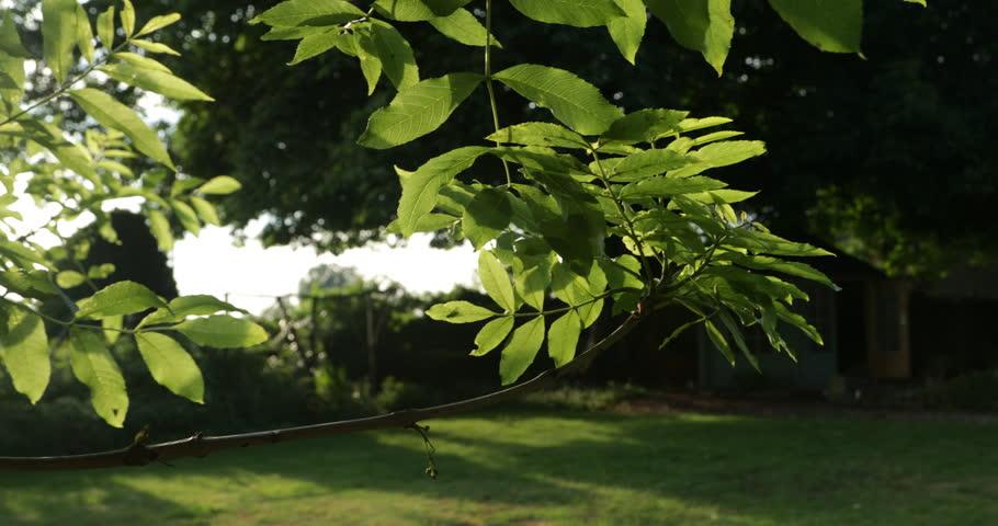 English country garden in the summer evening sunlight | Shutterstock HD Video #1012099712