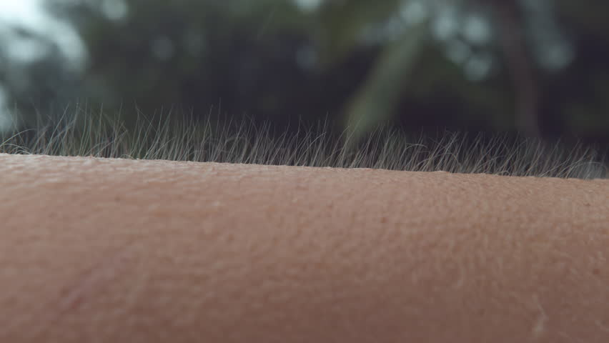 CLOSE UP, MACRO, DOF: Unknown Caucasian person gets goosebumps during a cold tropical rainstorm. Close up shot of arm hair fluttering in the breeze as unrecognizable girl can't escape the cold rain.
