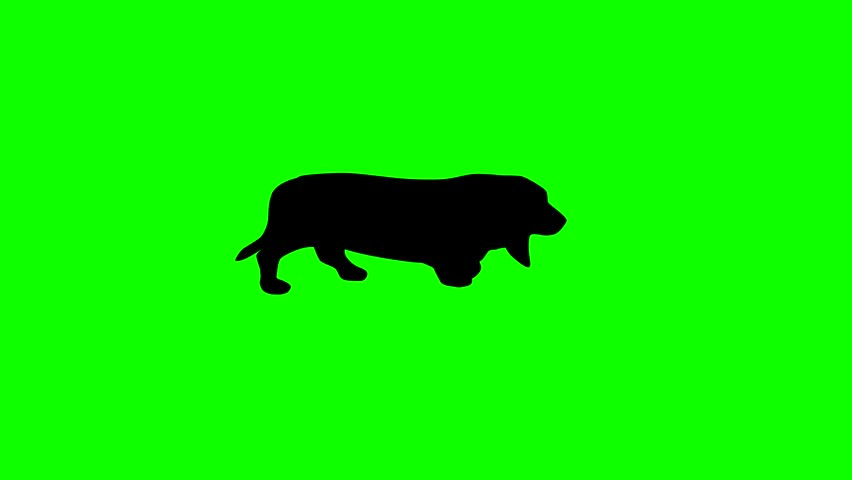 Silhouette of the black dog (basset hound), animation on the green background