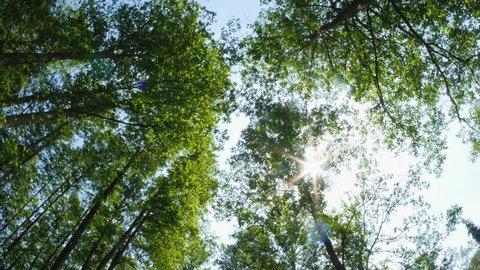 Looking up in forest, POV through tops of trees, sun shines through foliage