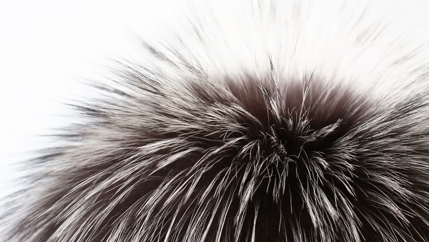 Natural fur from a black fox. Fur in the wind close up, abstract background of a luxurious fox fur.