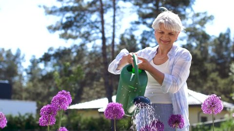 gardening and people concept - happy senior woman watering allium flowers at summer garden