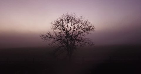Facing dead tree SLOW RISE UP into the heavy fog above the clouds to see a haunting sunrise. Meant for a title or haunting intermission, halloween, ending scene.