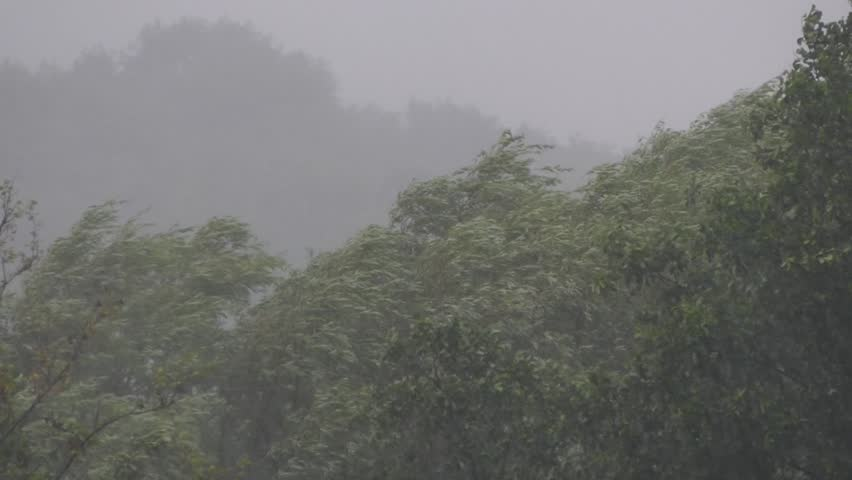 Storm and shower with lightning. Heavy rain with black clouds and wind and a hurricane. The rainy season in the jungle and forest thickets falls on trees. | Shutterstock HD Video #1012495682