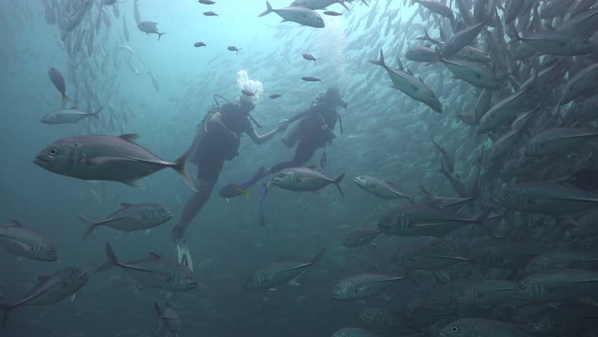 Two divers inside  Massive school of bigeye trevally ( Caranx sexfasciatus)    Shutterstock HD Video #1012677542