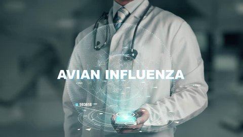 Doctor holding in hand Avian influenza