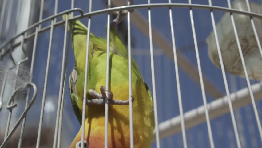 Video of parrot bird over blue sky background during summer sunny day - video in slow motion | Shutterstock HD Video #1012871402