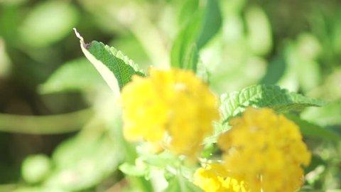 Closeup of flowers blooming