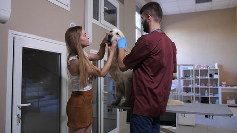 Cute golden retriever sitting on examination table at pet care clinic. Young male veterinarian doctor with otoscope checking dog's ears for infections while female owner holding the animal and helping