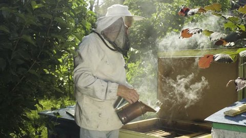 Beekeeper in protective uniform fumigate hive with bee smoker in slow motion