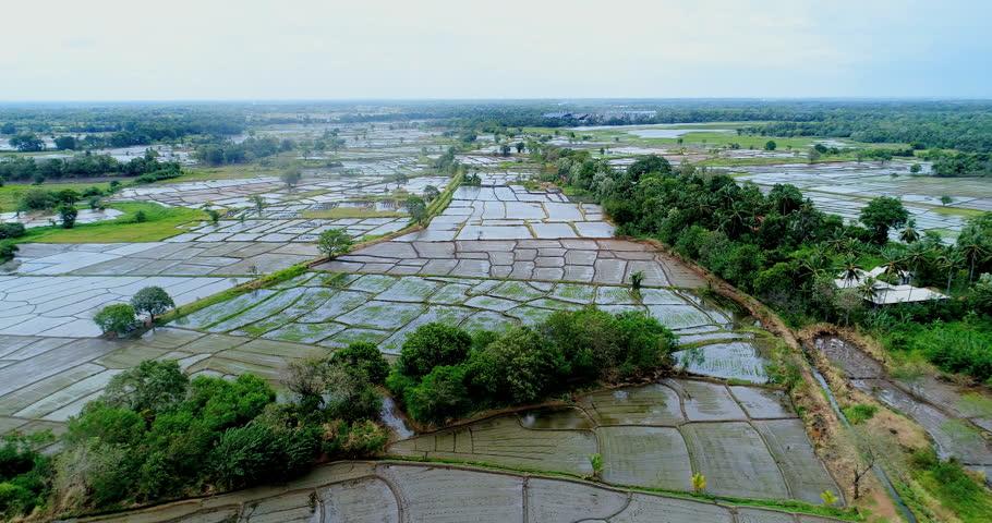 An aerial view of Sri Lanka's rice field