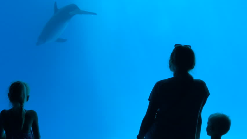 Silhouette of family, son and daughter with mother excited to watch the dolphin swimming under water in the aquarium | Shutterstock HD Video #1013478872