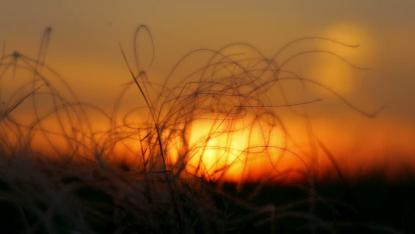 Nice stipa field in the sunset