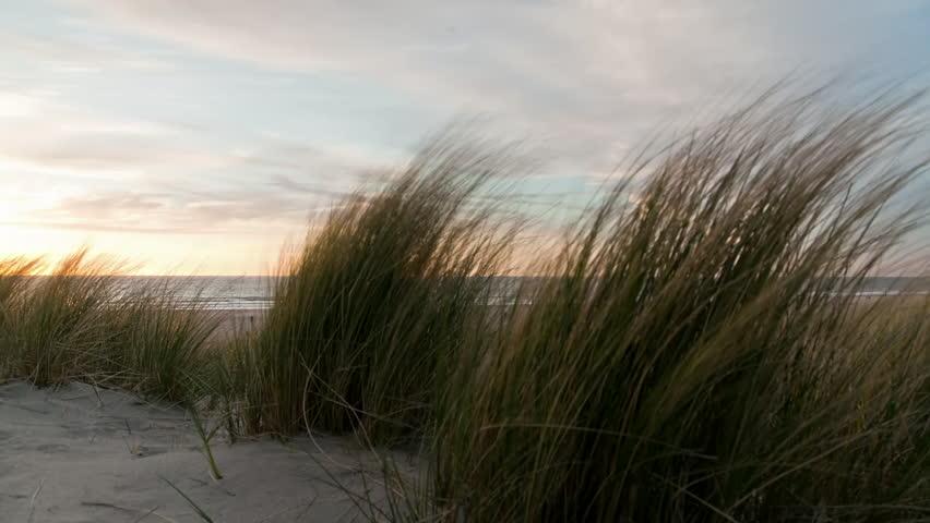 Timelapse of Dunes, beach houses and beach hook of holland, netherlands | Shutterstock HD Video #1013562092