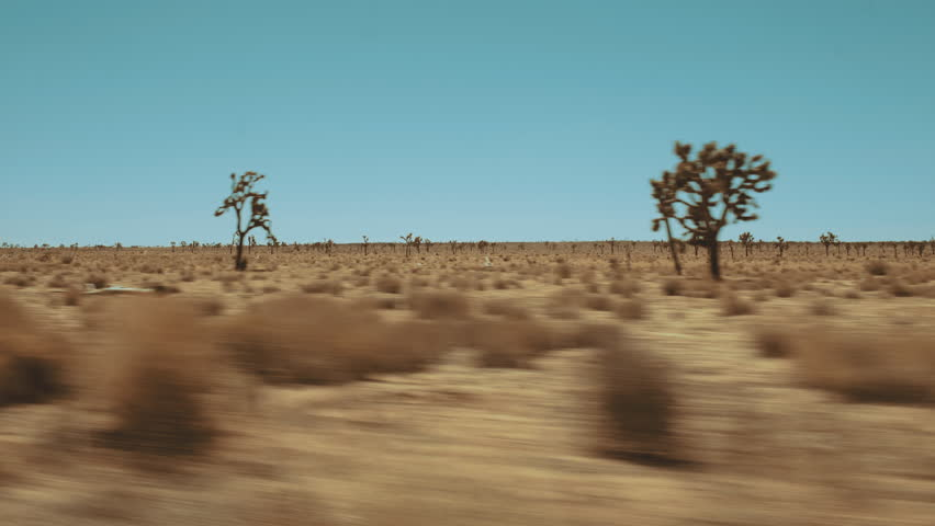 Dynamic Wide shot of Mojave desert with Yucca trees - froming car hot sunny day | Shutterstock HD Video #1013568632
