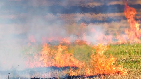 Intense outdoor wildfire in the field. Enviromental crime. Flame, heat and smoke motion outdoor.