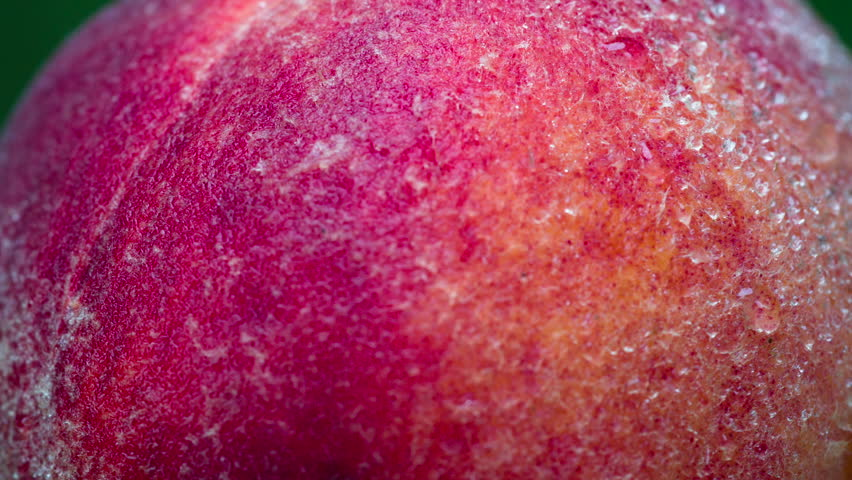Peach Covered with Dewdrops. Peach closeup rotates in front of the lens. Its velvety surface is covered with small drops of water