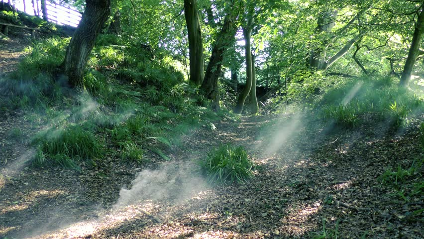 Eerie smoke disintegrating in a Cumbrian forest, natural sunlight highlights the smoke through the tree line as it evaporates