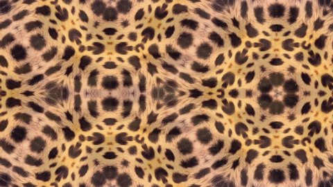 Abstract background animation based on leopard pattern. Beautiful pattern based on the Nature, seamless loop.