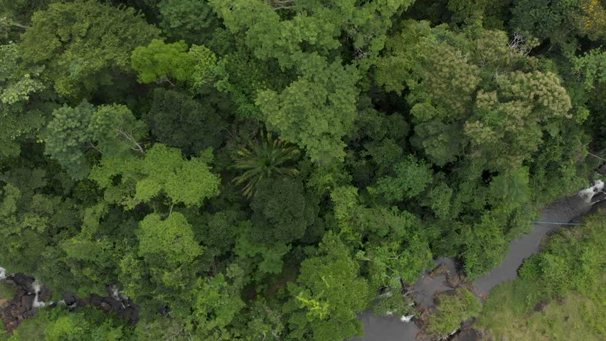 Flying top view over tropical forest. camacan, bahia, brazil