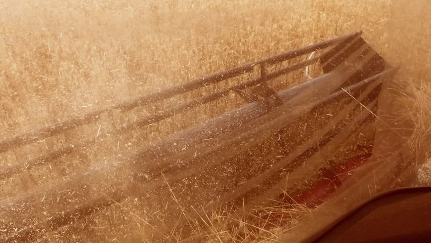 Man farmer driving combine harvesting on the field with wheat view from the combine salon view from the first person. the wheat harvesting concept lifestyle agriculture | Shutterstock HD Video #1014157112
