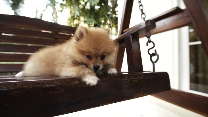 Admirable Small Dog On A Swing Bench Stock Footage Video 100 Royalty Free 1014295592 Shutterstock Frankydiablos Diy Chair Ideas Frankydiabloscom