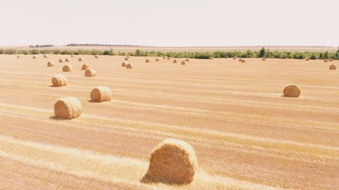 Rural field in summer with bales of hay. Aerial view rolls haystacks straw on field, after harvesting wheat. Landscape of Ukraine. Drone footage. Camera backward movement