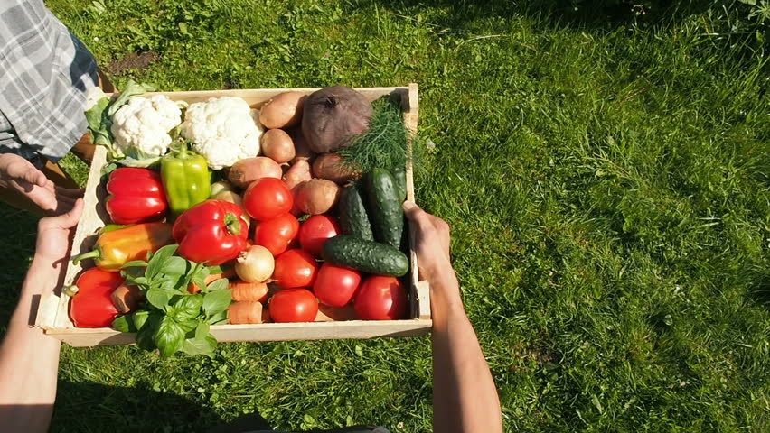 Farmers Market: Farmer Giving Box Full Of Fresh Organic Vegetables  To Customer. Healthy Eating Concept. Agriculture Industry. Summer Vegetables Harvest Organic Farming Crops.  | Shutterstock HD Video #1014353882