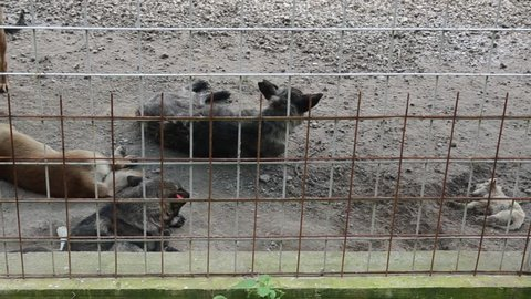 Poor and dead puppy. Unwanted and homeless dogs barking in animal shelter. Asylum. Stray dogs in an iron cage. Poor and hungry street dogs. Feral dog in prison.