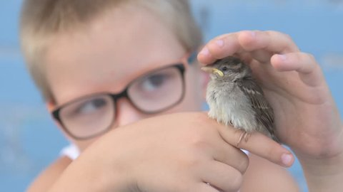 Child caught sparrow and looked at it in their hands. concept of respect for nature and animals.