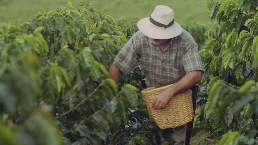 Coffee Farmer Quindio Colombia 06
